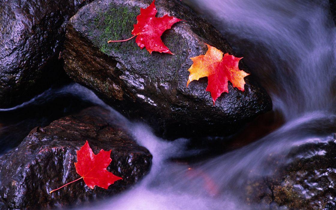 Wilting leaves on rocks wallpaper