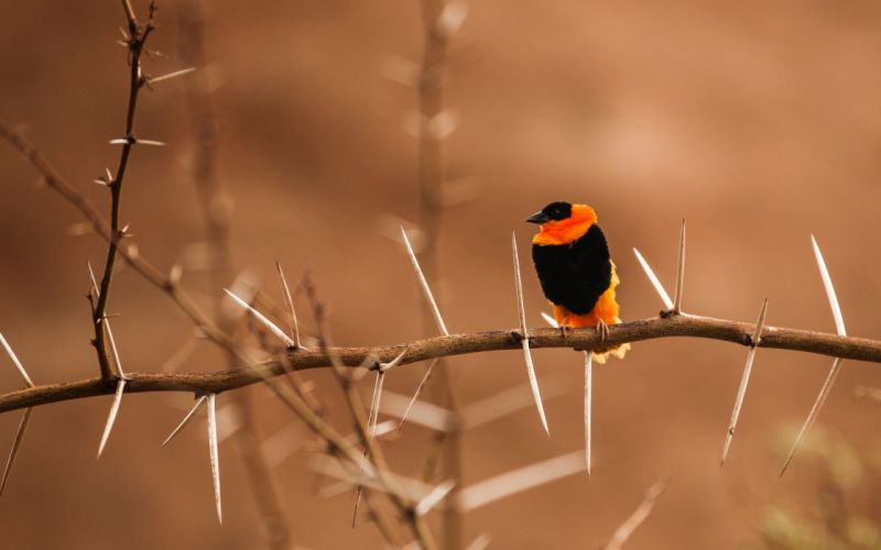 Colorful Bird On A Thorny Branch wallpaper
