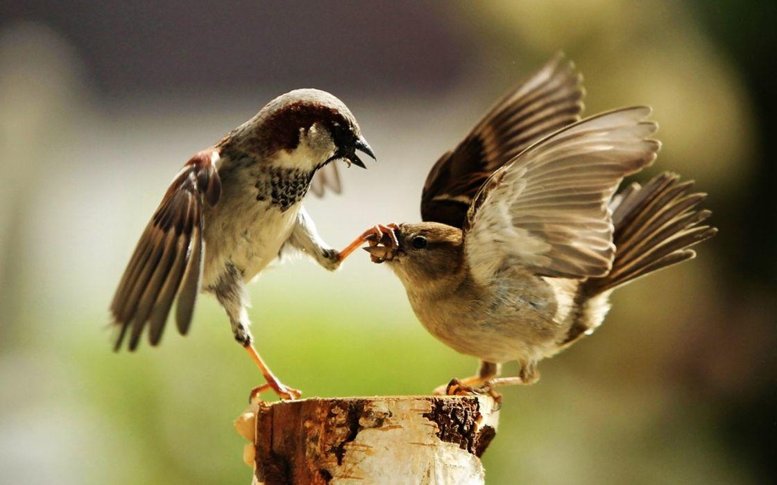 Bird family feud wallpaper
