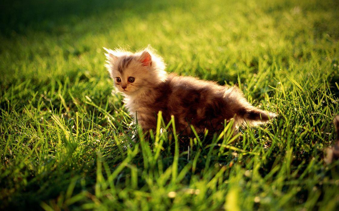 Kitty on grass wallpaper