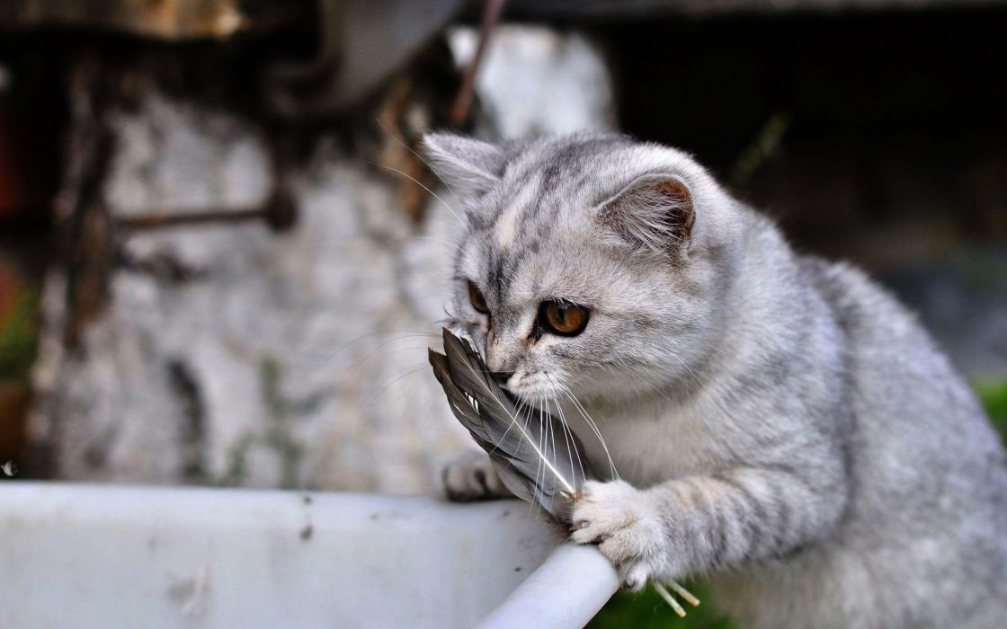 Lovely cat playing wallpaper