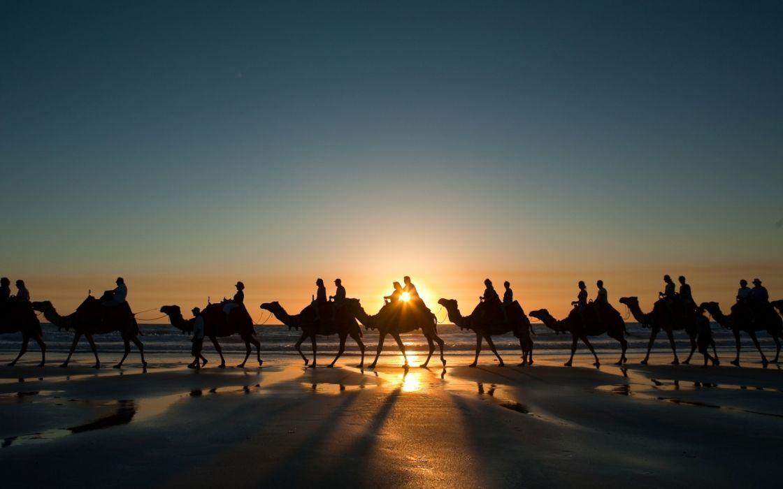 Camel ride wallpaper