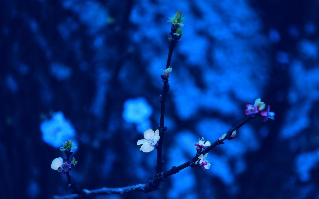 Blue Spring wallpaper