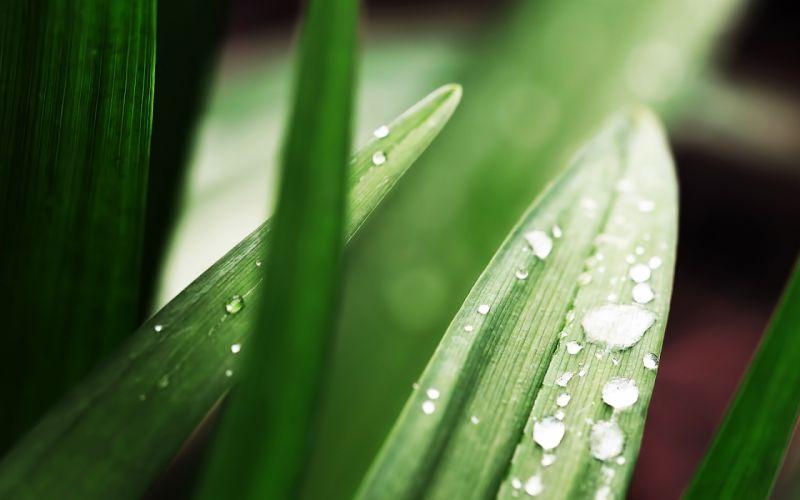 Dew on grass wallpaper