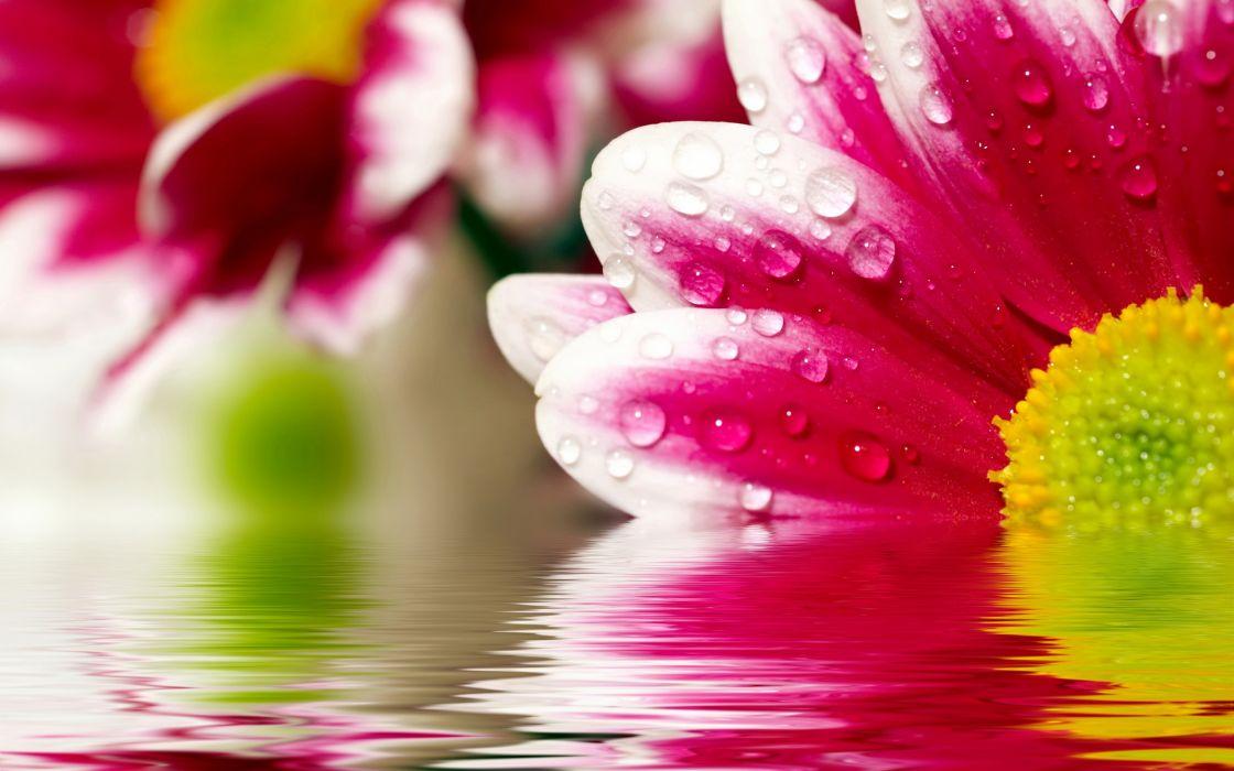 Flower reflections wallpaper