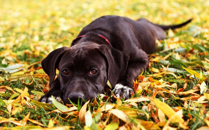 Dog and leaves wallpaper