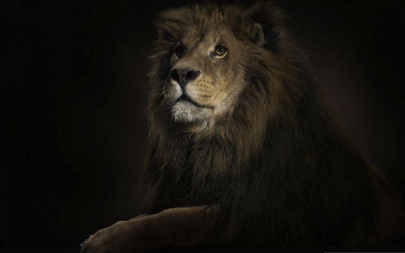 Seriously lion king wallpaper