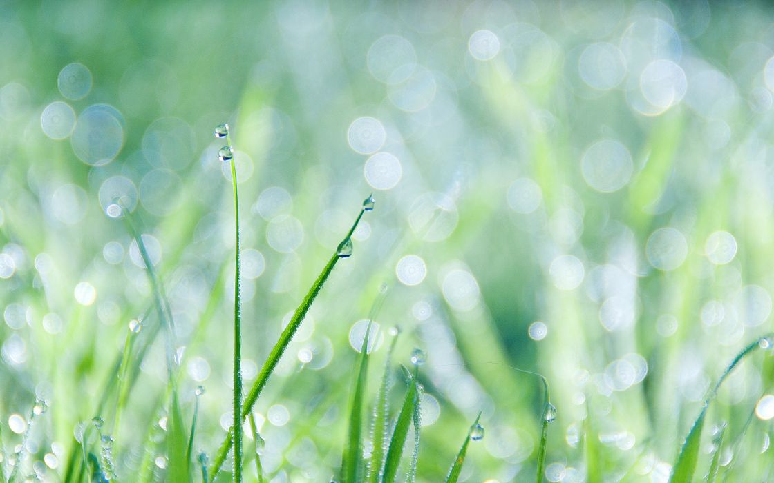 Grass and dew wallpaper