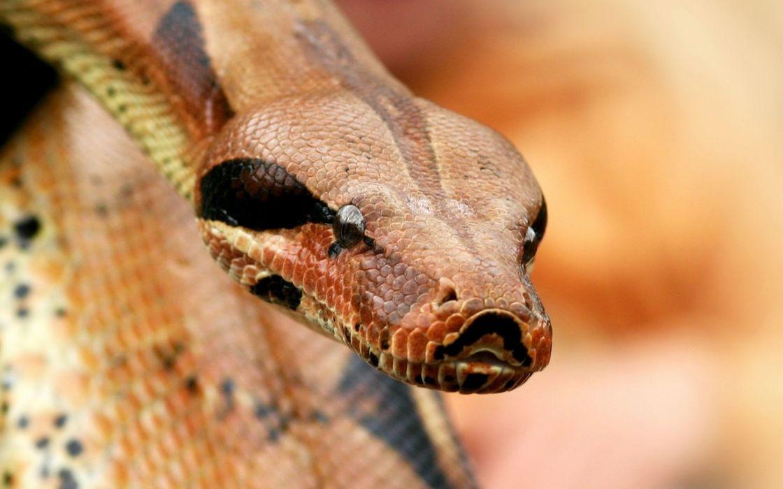 Snake hunting wallpaper