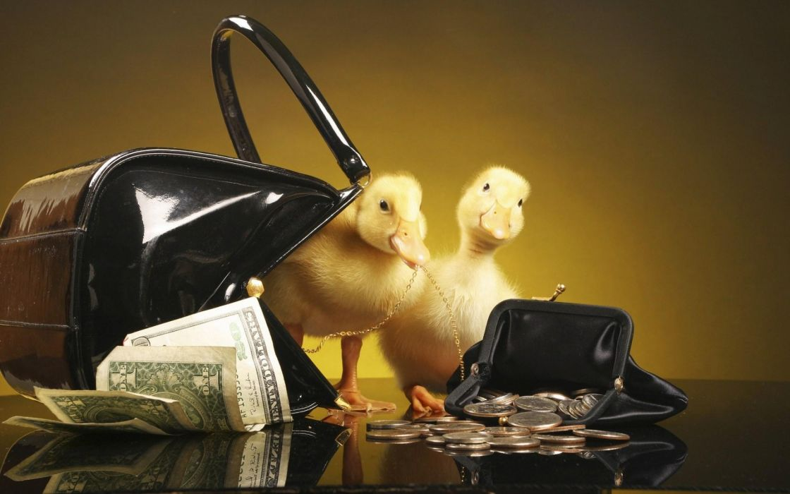 Ducklings with purse and money wallpaper