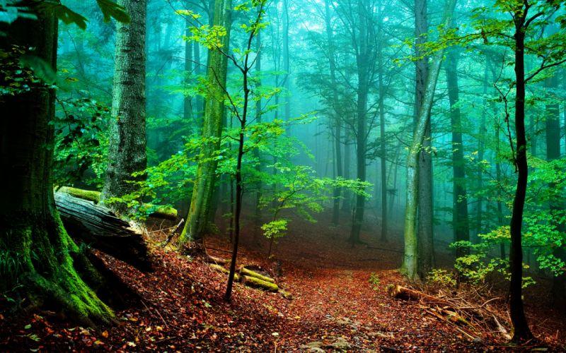 Forest fog wallpaper