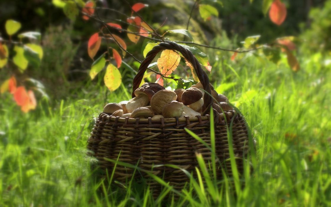 Basket with mushrooms wallpaper