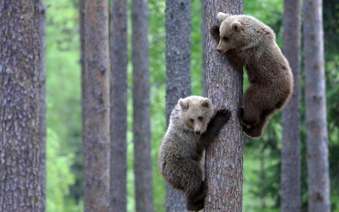 Teddy bear brothers wallpaper