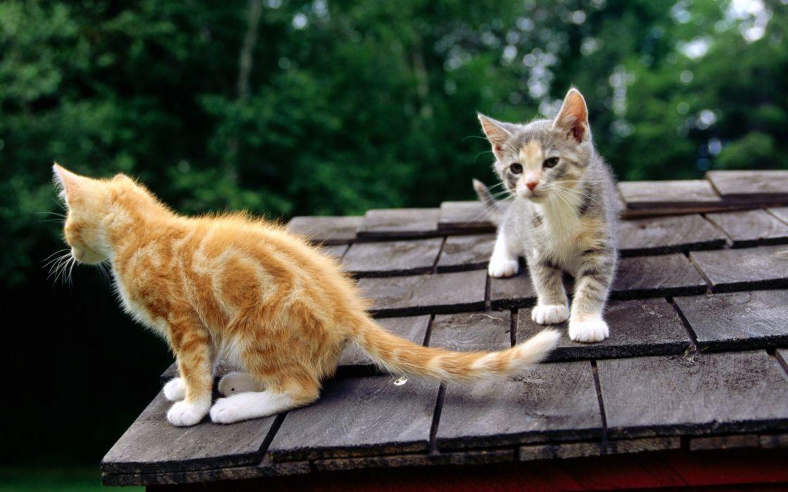 Observing cats wallpaper
