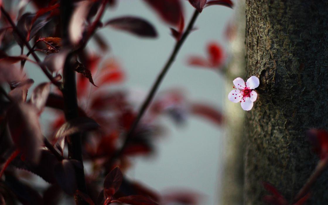 Single pink flower wallpaper