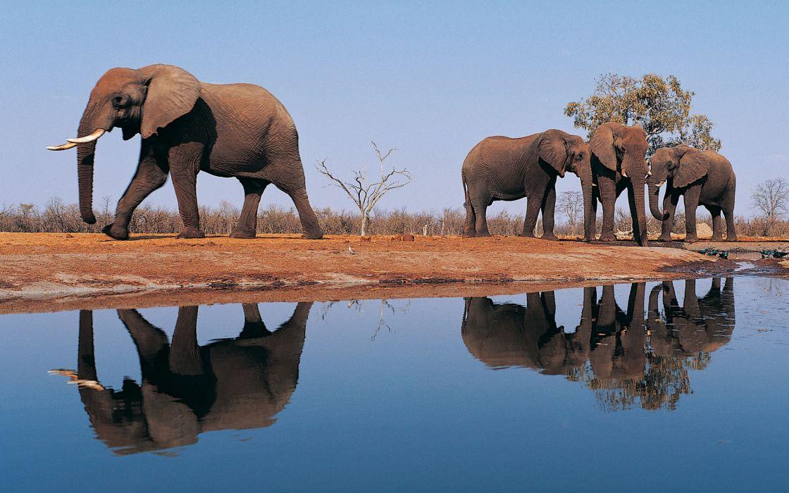 Elephants around lake wallpaper