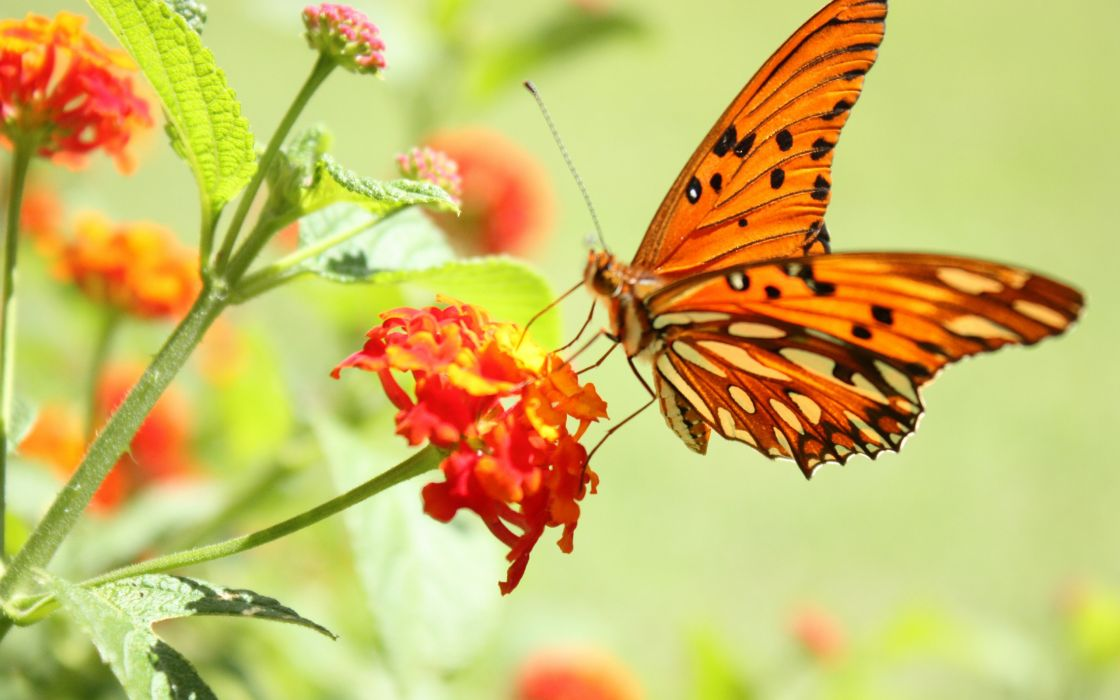 Butterfly and flowers wallpaper