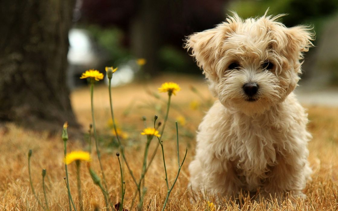 Cute Puppy Wallpaper 2880x1800 4180 Wallpaperup