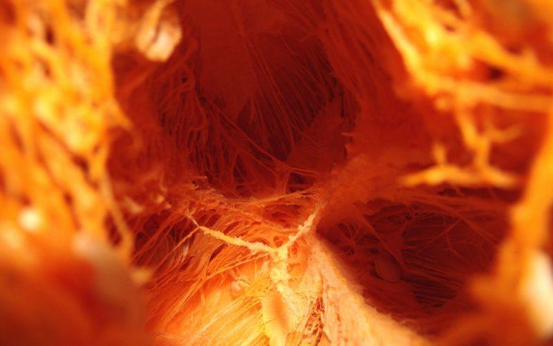Inner pumpkin wallpaper