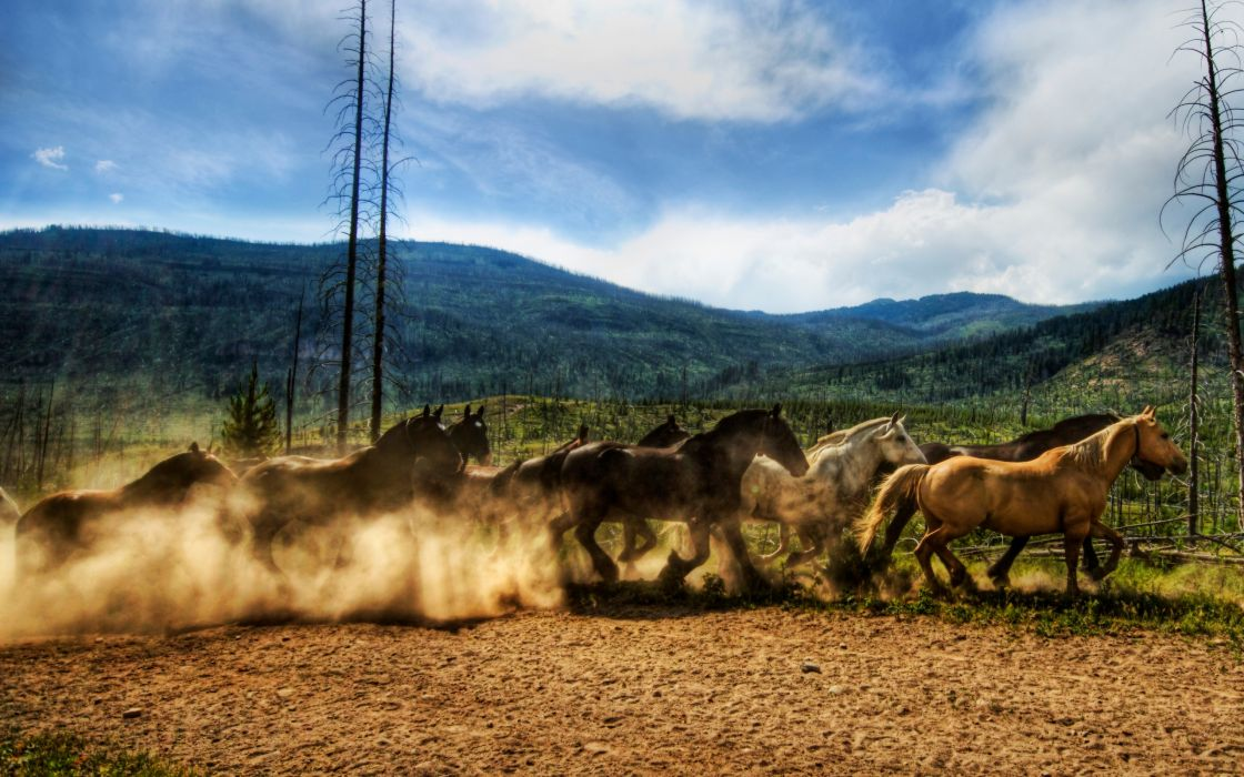 Wild horses race wallpaper