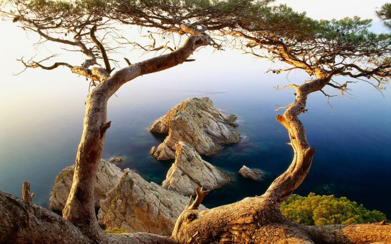 Trees near to cliffs ocean wallpaper
