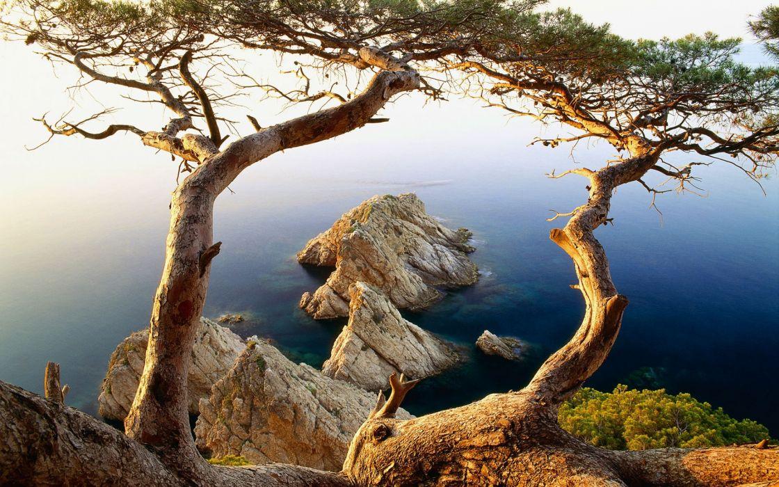 Trees near to cliffs ocean wallpaper