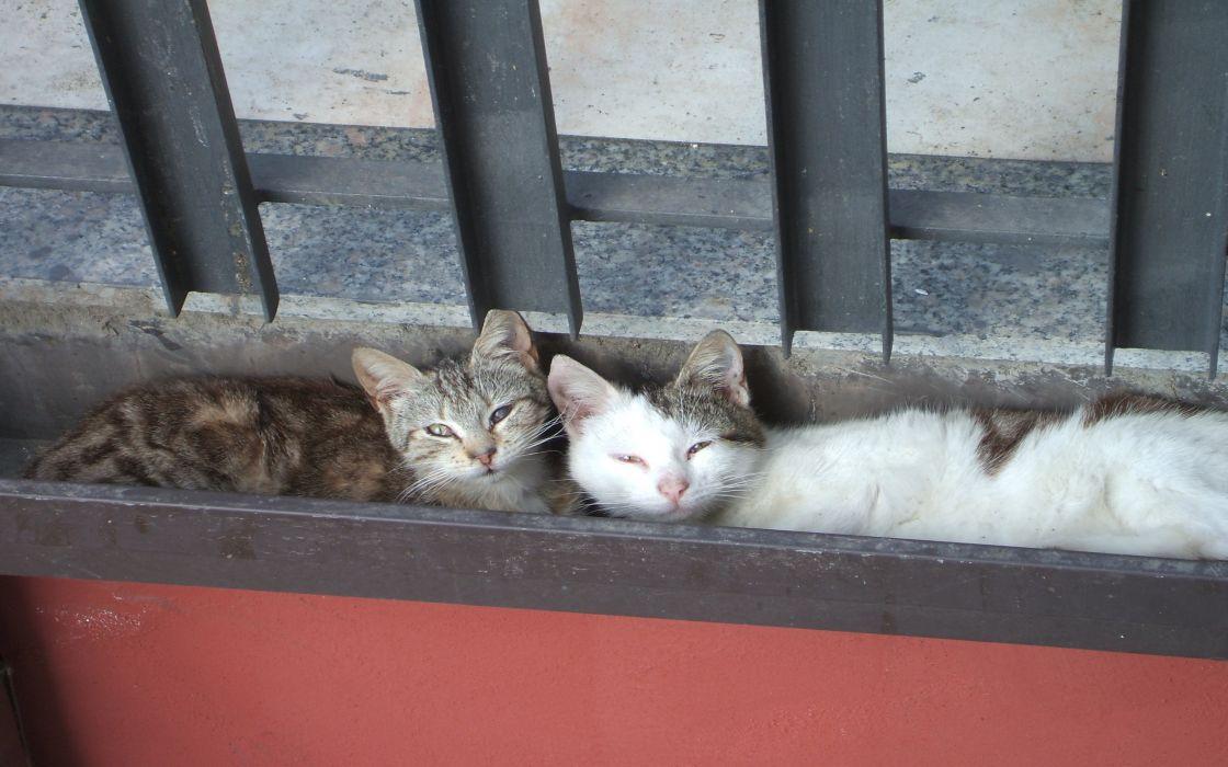 Sweet cats wallpaper