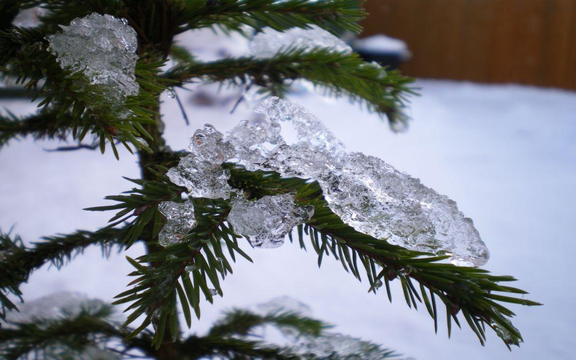 Icey christmas tree wallpaper
