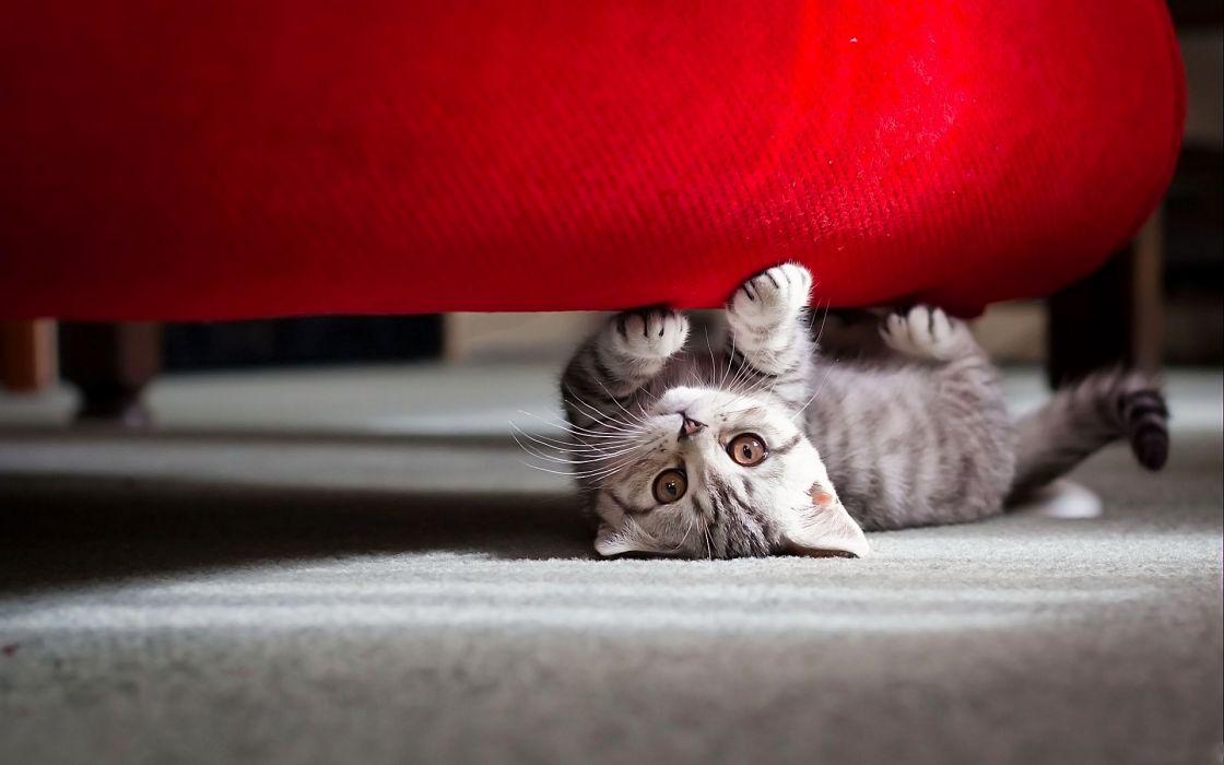 Little cat playing wallpaper