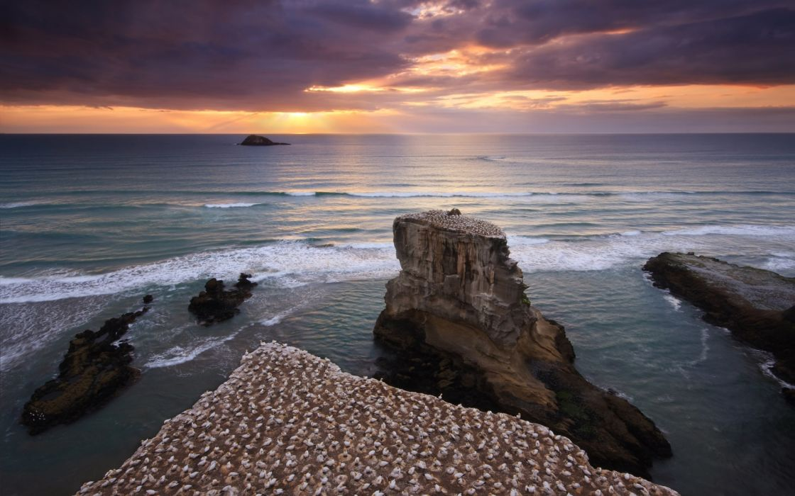 Muriwai gannet colony wallpaper