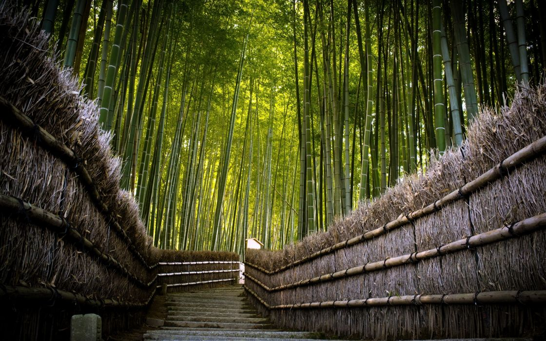 Bamboo fence wallpaper