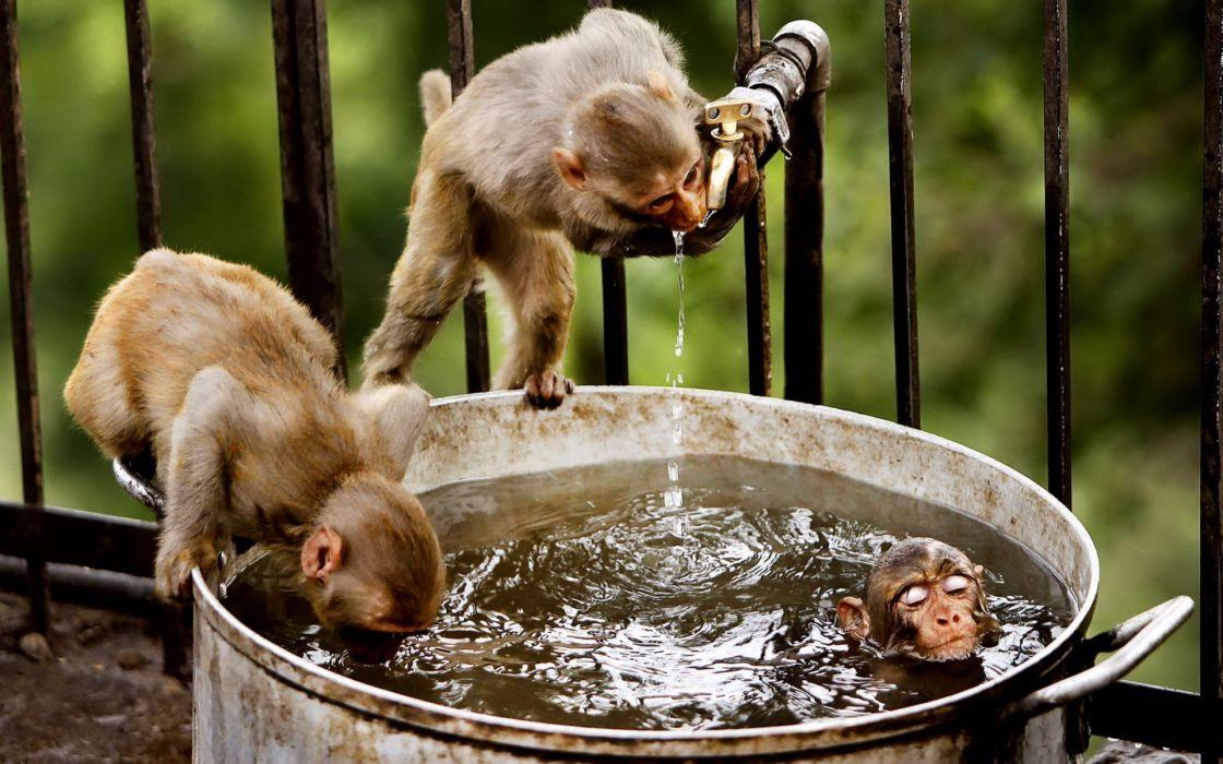 Little monkeys wallpaper