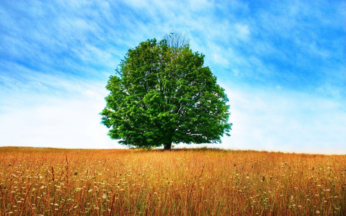 Dryness tree wallpaper