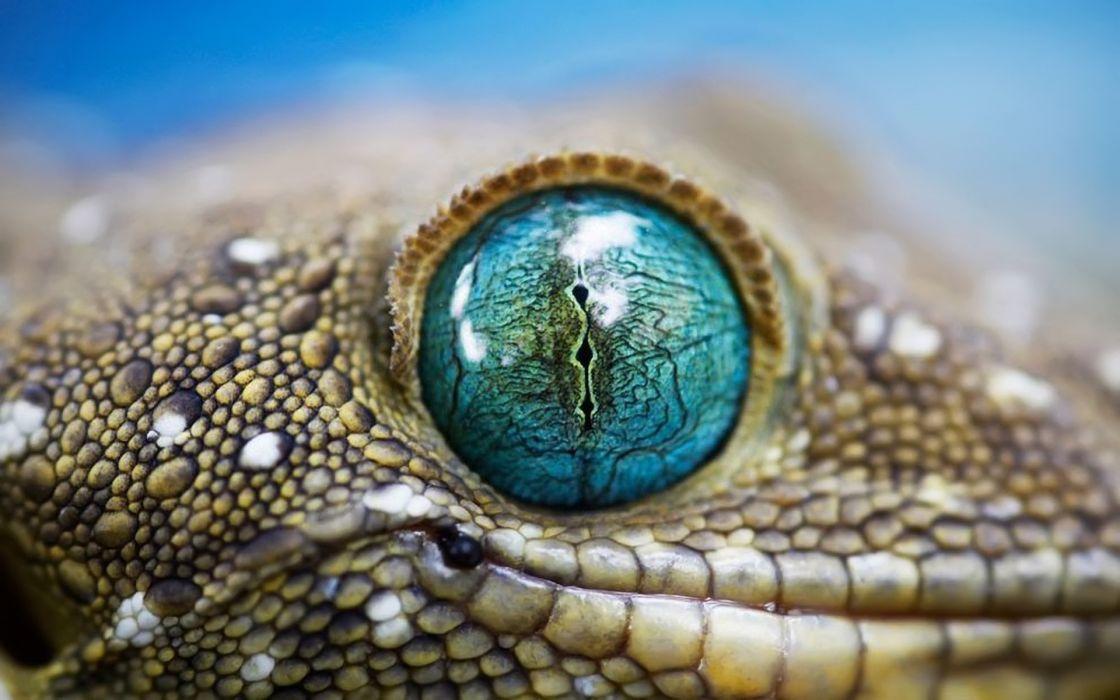 Blue reptile eye wallpaper