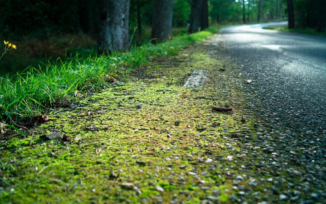 Country road wallpaper