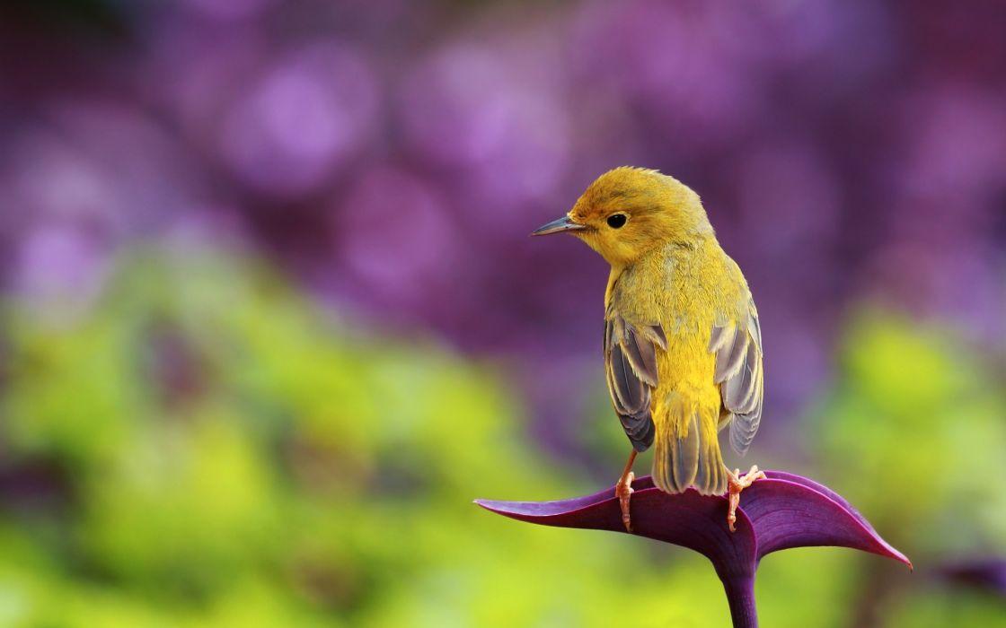 Little bird wallpaper