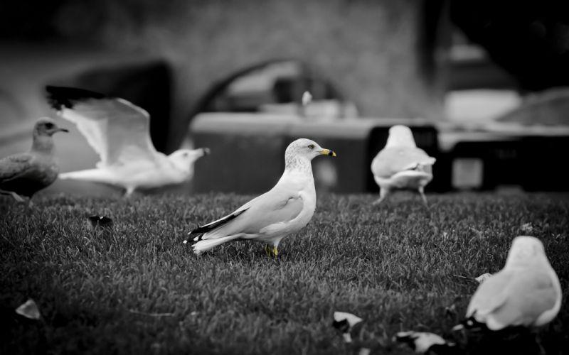 White doves wallpaper