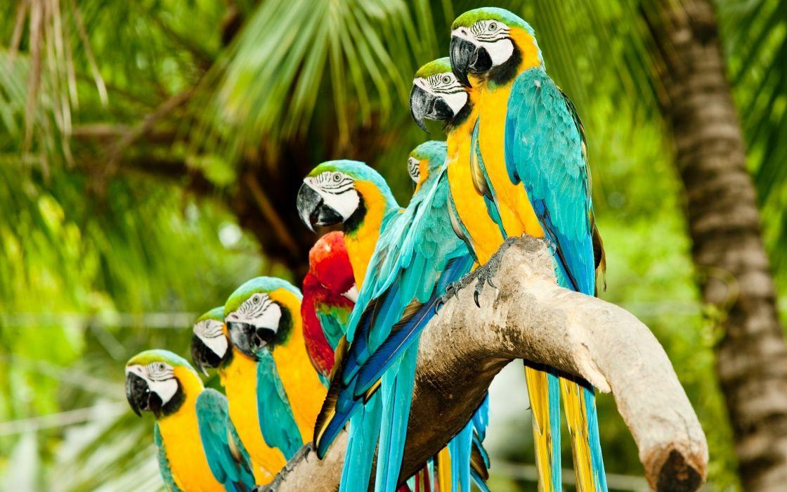 Colourful parrots wallpaper
