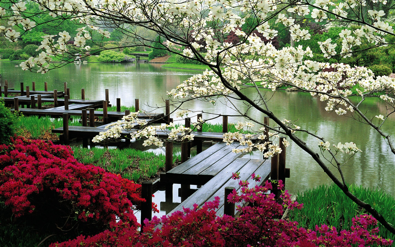 flower park background - photo #9