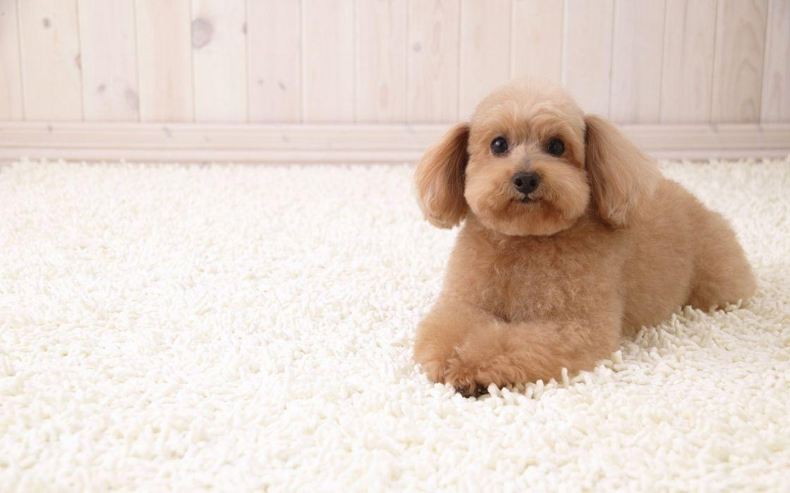 Puppy dog wallpaper