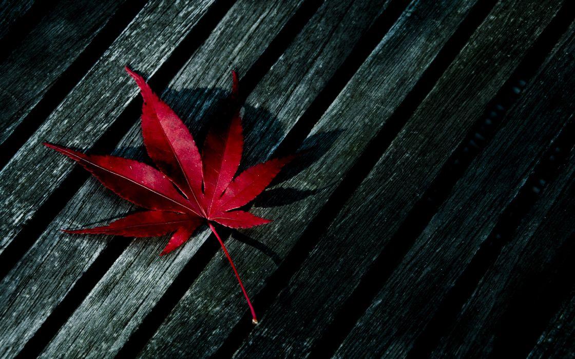 Red fallen leaf wallpaper