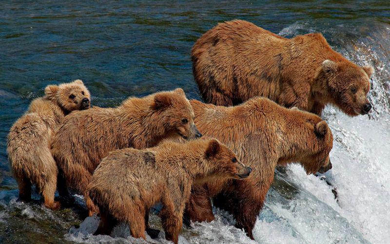 Bear family wallpaper