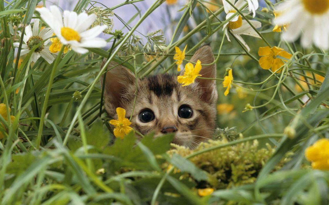 Cat lost in grass wallpaper