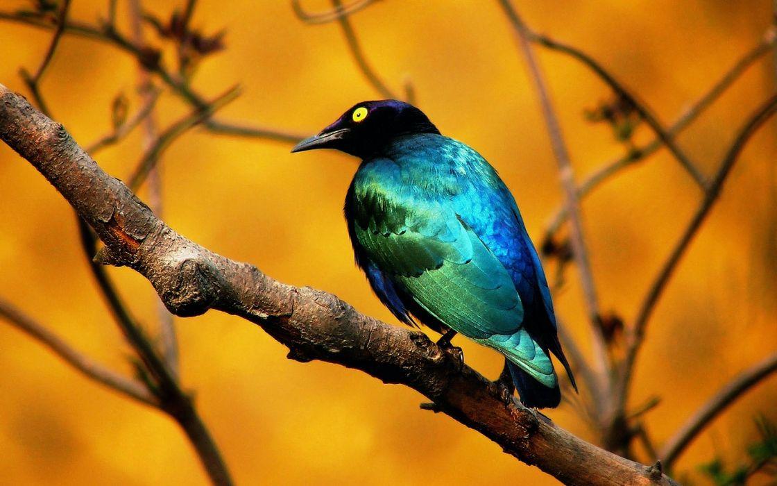 Blue bird wallpaper
