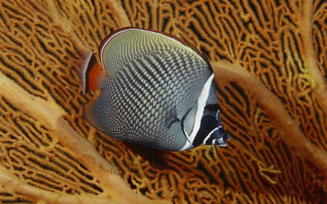 Single beautiful fish wallpaper