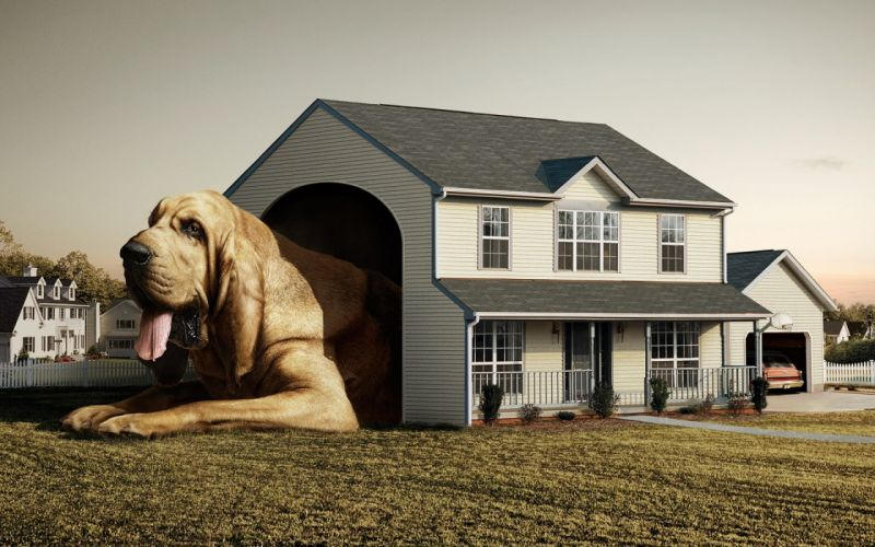 Dog real house wallpaper