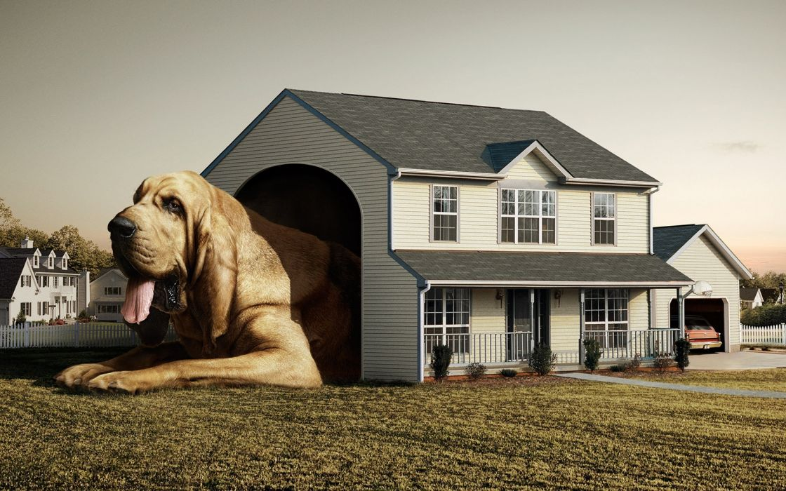 Dog real house wallpaper