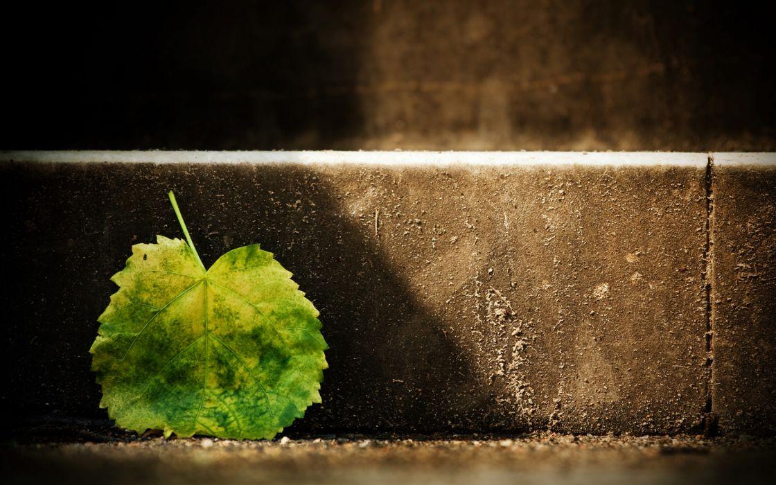 Single green leaf wallpaper
