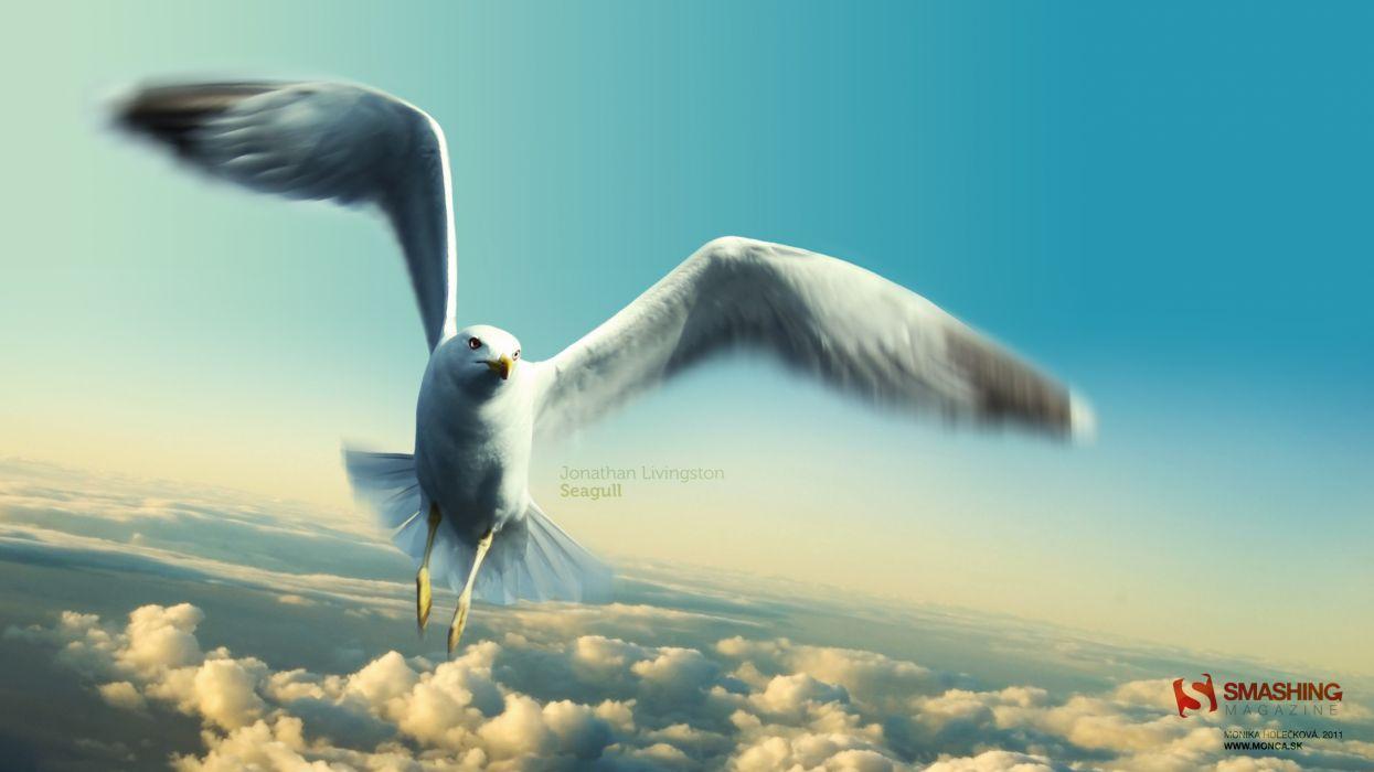 Jonathan livingston seagull wallpaper