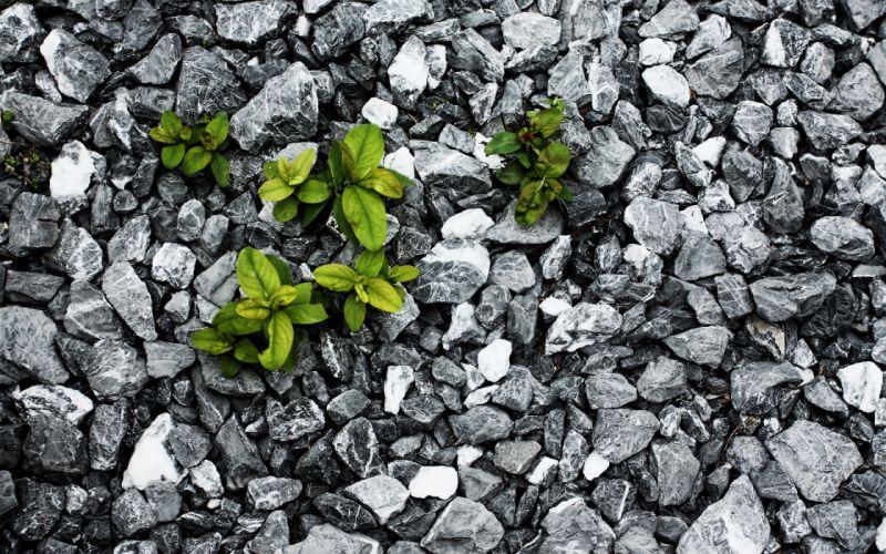 Plants between the stones wallpaper